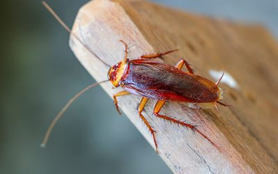 5 ways you can keep roaches away